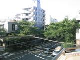 桜並木[2007.08.01]