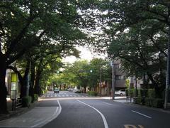 桜-2010(中野通り[北]05.15)