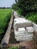 市貝(20110814)大谷石塀西