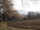 南アルプス(20150409)蕪桜並木