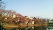 牛池桜(20140410)八ヶ岳
