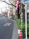 中野通り桜まつり2012(提灯設営3.20)