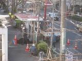 中野通り桜植え替え(植込み)