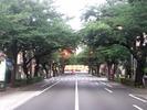 中野通り桜2012(南)7.18