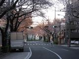 桜-2011(中野通り:北)4.05