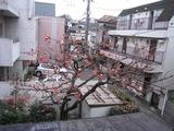 柿-2010(自宅12.19)1