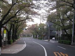 桜-2010(中野通り[北]04.18)