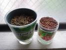 ベビーリーフ&ミニトマト(種まき2日目)