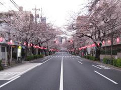 桜-2010(中野通り[南]04.01)