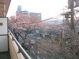 桜並木2007[03.28-1]