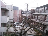 雪?(2011.02.11)