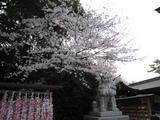 寒川神社(080402)