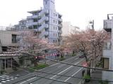 桜並木2007[03_27]