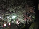 中野通り桜(080329夜桜-2)