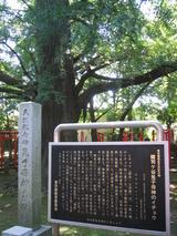 155_5540.JPG-icho