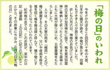うめの日(6.6)