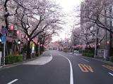 桜-2010(中野通り[北]03.31)