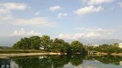 牛池桜(20140529)南アルプス