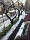 中野通り「雪」(2013.1.15)北