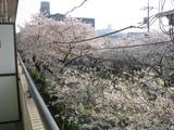 桜並木2007[04.01-1]