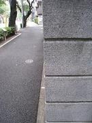 セミ(脱皮後・行方不明)2010.07.26