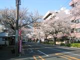 桜並木の提灯-1[2006]