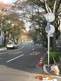 桜-2010(中野通り[北]11.15)