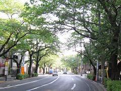 中野通り「桜」 2009.04.29-n