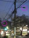 街路灯(中野通り)2011.03.25