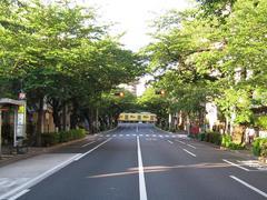 桜-2010(中野通り[南]05.15)