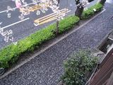 桜-2010(中野通り[歩道]04.05)