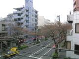 桜並木2007[03_24]