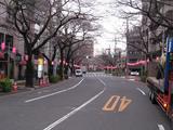 中野通り「桜」 2009.03.22-n