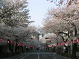 満開♪[2006.04.01]