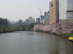 桜-2010(外堀[市ヶ谷:四谷方面]04.06)