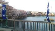 長坂夜桜まつり(橋)