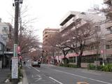 中野通り「桜」(2009.03.29-s)