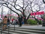 桜まつり2007[会場入口]
