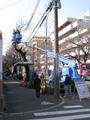 中野通り桜植え替え(伐採)