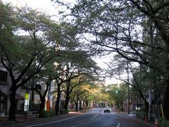 中野通り「桜」 2009.04.15-n