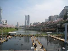 桜-2010(外堀[市ヶ谷:飯田橋方面]04.06)