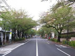 桜-2010(中野通り[南]04.24)