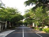 桜-2010(中野通り[南]06.01)