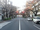 中野通り桜2012(南)12.2