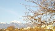 牛池(20140401)桜&南アルプス