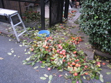 「柿」収穫(2008.12.06)