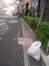 桜-2010(中野通り[掃除]04.09)