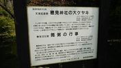穂見諏訪十五所神社(20141012)秋大祭大欅