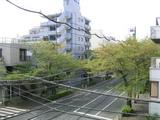 桜並木2007[04.15-2]