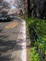 中野通り「桜」 2009.04.09-また来年